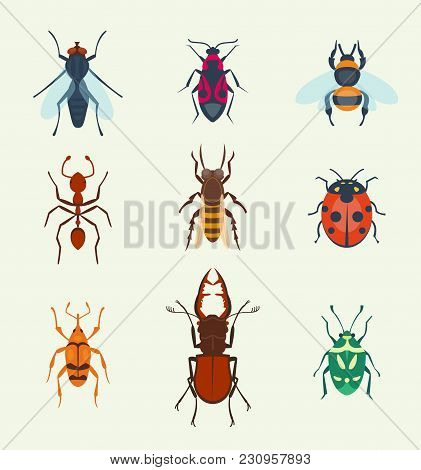 Colorful Top View Insects Icons Isolated On White Wildlife Wing Detail Summer Worm And Caterpillar B
