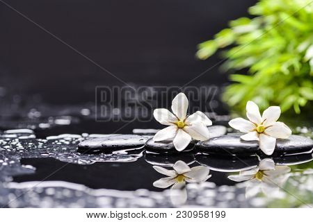 spa concept –white gardenia and green leaf