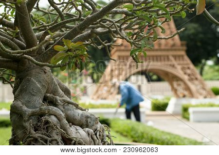 Park Of Miniatures. Ficus Against The Backdrop Of A Miniature Model Of The Eiffel Tower. The Gardene