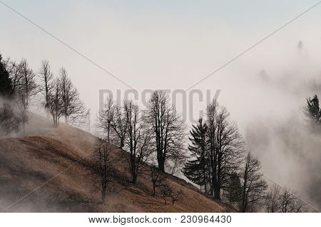 Foggy Naked Tree Slope In The Winter