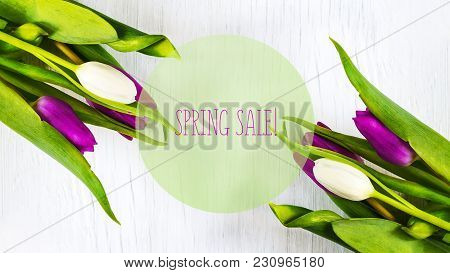Beautiful Tulips On White Tree Background. Concept Spring Sale. Copy Space.
