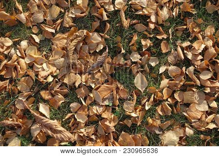 Top View Of Fallen Leaves In Green Grass
