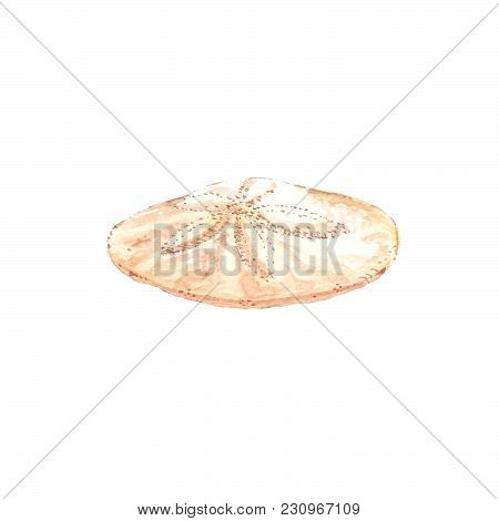Watercolor Illustration Of Sand Dollar Seashell, Travel Beach Concept, Isolated On White.