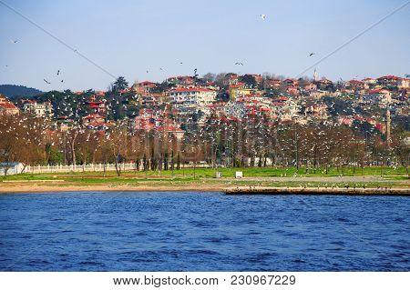 The Flight Of Seagulls Over The Bosporus. Istanbul, Turkey.