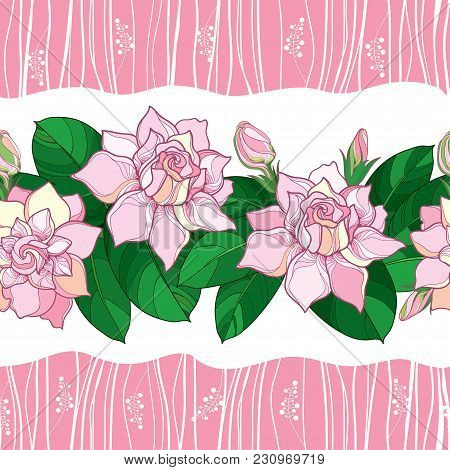Vector Seamless Pattern With Outline Gardenia Flower In Pastel Pink Color. Ornate Bud And Green Leav