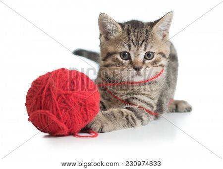 kitten cat playing clew ball isolated
