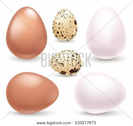 Set Of Realistic Eggs Isolated On White Background.white, Brown Chicken Eggs And Eggs Quail Right An