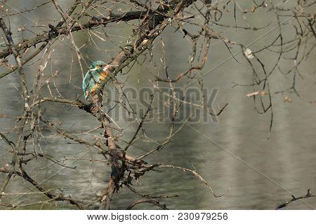 Kingfisher On Tree