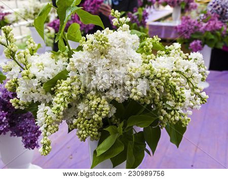 Lilac Of The Species Of Syringa Vulgaris Monique  In A Bouquet
