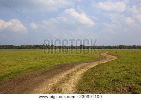 Sri Lankan Landscape With Forest And Open Space In The National Park Of Minnerya With A Sandy Track