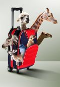 Red suitcase with collection of different exotic animals inside poster