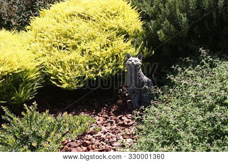 This Is An Afternoon Image Of A Golden Bush Growing Outdoors In Carmel, California.