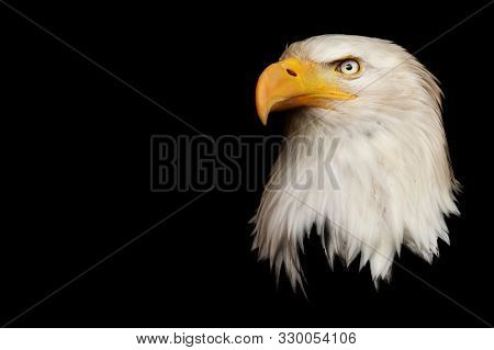 The Head Of A Bald Eagle Against A Black Background. The Symbol Of The United States Of America.