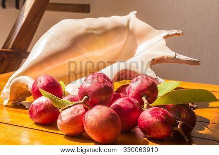 Small Red Fruit And Shell On Table