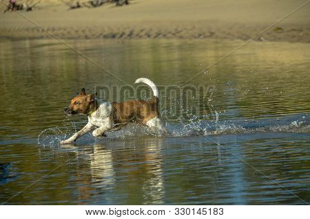 Caninine Activities. Dog Exercising Running Through Ocean Waters On A Coastal Tropical Beach In Thai
