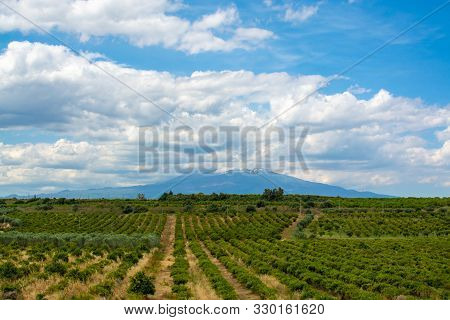 Landscape With Orange And Lemon Trees Plantations And View On Mount Etna, Sicily, Agriculture In Ita