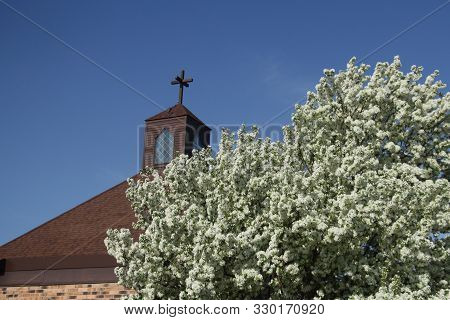 A Flowering Tree In The Spring Against A Church Steeple And A Blue Sky.