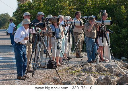 Sanibel Island, Florida - February 8, 2009: Group Of Bird Photographers With Long Lenses In Ding Dar