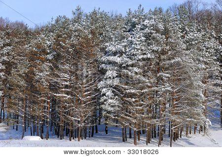 Winter landscape eastern township, Quebec, Canada