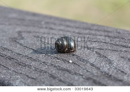 A brown seashell left abandoned on top of a wooden rail. poster