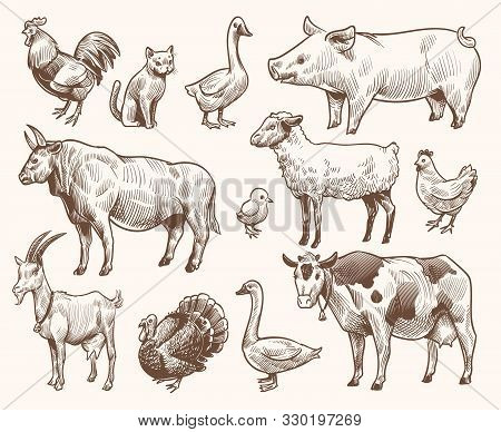 Sketch Farm Animals. Pig And Cat, Bull And Cow, Rooster And Chicken, Goat And Ram, Goose And Turkey.