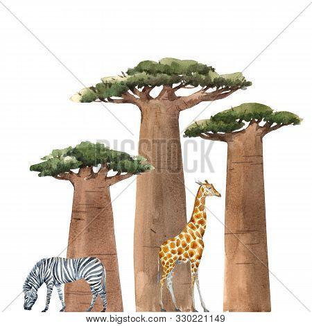 Watercolor Hand Drawn Baobab Adansonia African Tree Illustrations Print Clip Art With Safari Animals