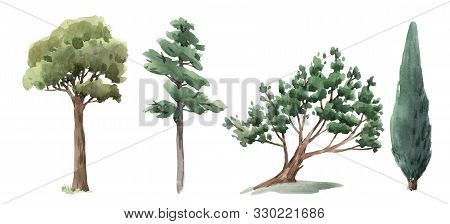 Isolated Illustrations With Watercolor Forest Trees Oak Fir Birch, Thuja Linden Baobab Pine