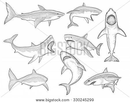 Ocean Shark. Big Sea Fish Silhouettes Flowing Creature With Big Tooth Aquatic Animal Vector Shark Ta
