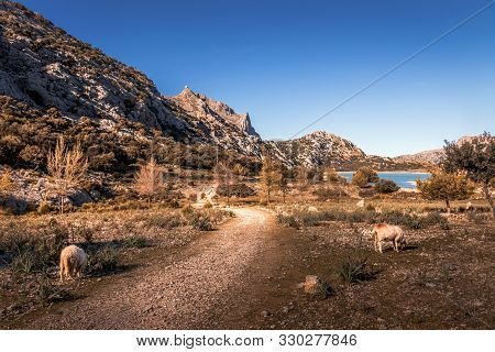 Tramuntana Mountains On A Sunny Day With Blue Skies, Lake Reservoir, Trees, Trails And Wildlife, Mal