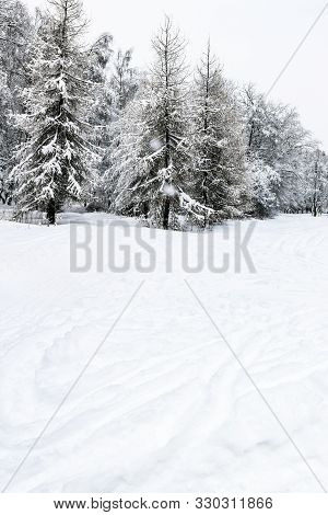 Snowfield With Ski Runs And Snow-covered Coniferous Forest On Winter Day