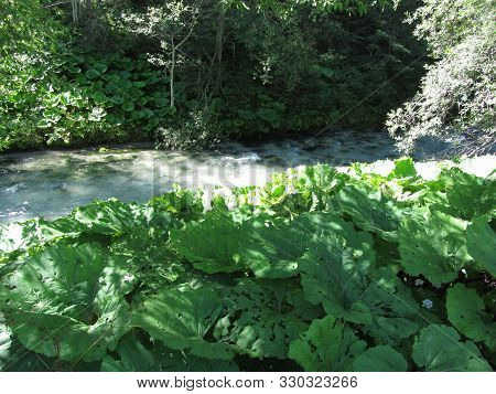 The Vegetation Of Running Waters . Torrent In The Woods