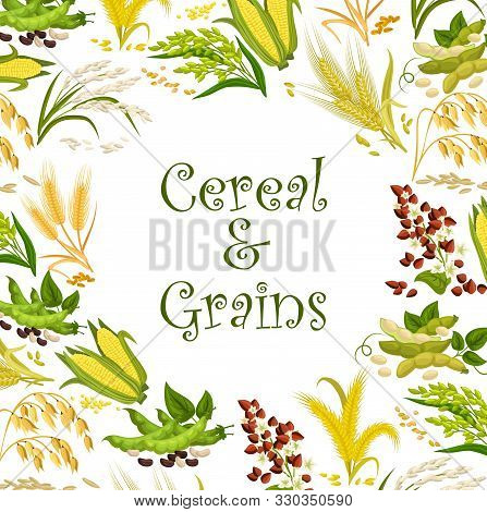 Cereal Seeds And Bean Grains Vector Frame With Rice, Wheat And Buckwheat, Corn, Millet And Oat, Soy,