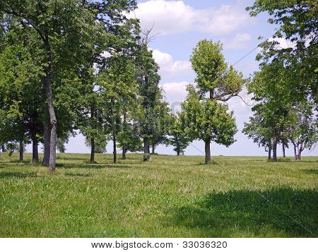 field of trees