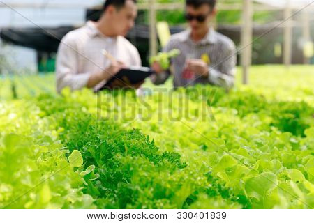 Hydroponics Farm ,worker Testing And Collect Environment Data From Lettuce Organic Hydroponic Vegeta