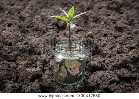 Coins In Glass Jar With Little Plant Growing On Money - Finance Growth, Saving And Investment Money