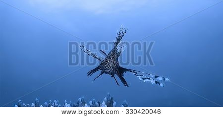 Underwaterphoto Of A Lionfish From A Scuba Dive Off The Coast Of Aonang In Thailand.