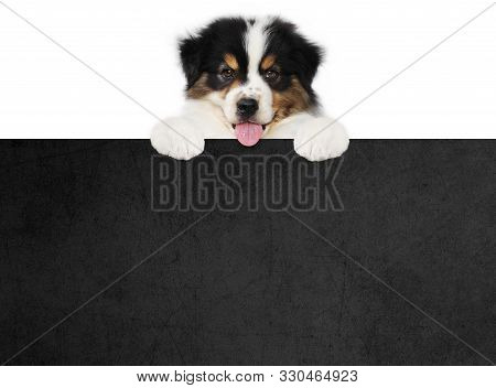 Funny Pet Puppy Dog Showing A Black Placard Isolated On White Background Blank Template With Copy Sp