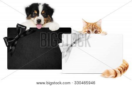 Puppy Dog And Cat Pets Together Showing  Black And Silver Gift Card Isolated On White Background Bla