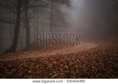 Mysterious Pathway. Footpath In The Dark, Foggy, Autumnal Amd Mystique Forest