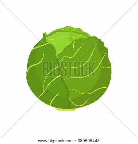 Cabbage Vegetable Natural Diet Nature Symbol Vector Icon Flat. Green Farm Plant Harvest Ingredient F