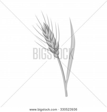 Vector Design Of Barley And Sheaf Sign. Set Of Barley And Crop Stock Symbol For Web.