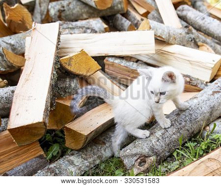 Small, Inquisitive, Playful Kitten Runs Around A Pile Of Firewood, In A Village, On An Autumn Day.