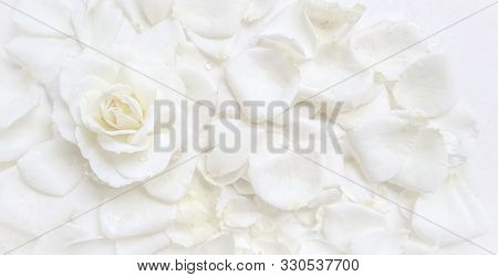 Beautiful White Rose And Petals On White Background. Ideal For Greeting Cards For Wedding, Birthday,