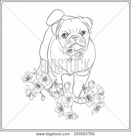 Pug Dogs With Blooming Sakura Spring Flowers. Vector Illustration. Outline Hand Drawing Vector Illus