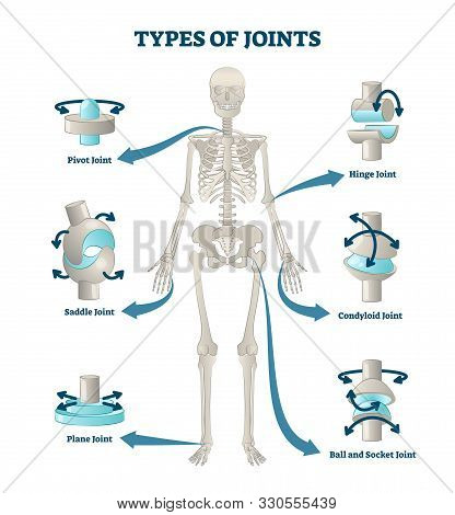 Types Of Joints Vector Illustration. Labeled Skeleton Connections Scheme. Educational Anatomical Dia