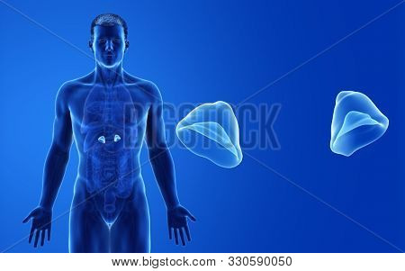 3d rendered medically accurate illustration of the male adrenal glands