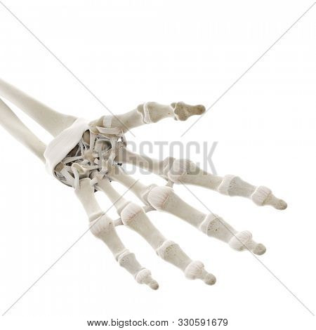 3d rendered medically accurate illustration of the ligaments of the hand