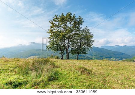 Trees On The Grassy Meadow In Mountains. Beautiful Sunny Morning With Cloudy Sky. Early Autumn In Gr