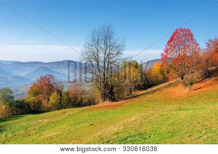 Sunny Forenoon In Mountainous Rural Area. Wonderful Countryside Autumn Landscape. Trees In Colorful