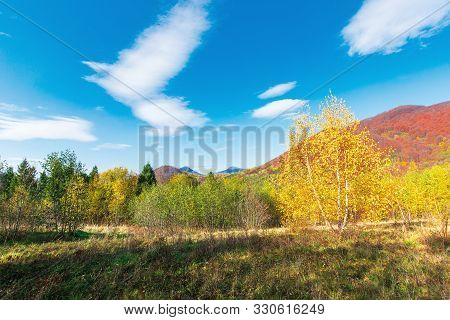 Wonderful Landscape In Autumn. Birch Trees In Yellow Foliage. Distant Mountain In Fall Colors. Sunny